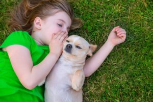 Steer Clear Of These Common Columbus New Puppy Owner Mistakes